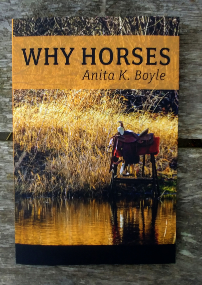 Cover of Why Horses